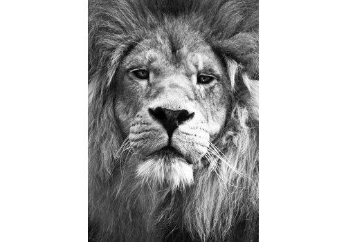 Lion A4