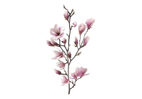 cre8design Magnolia A4