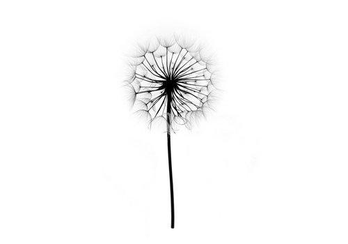 Dandelion A4
