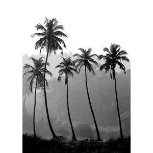 cre8design Palm trees 21x29,7 - A4