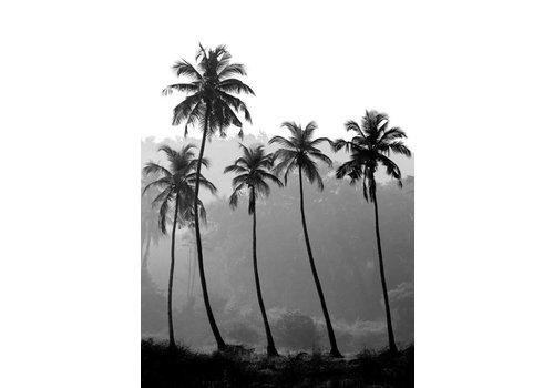 Palm trees A4