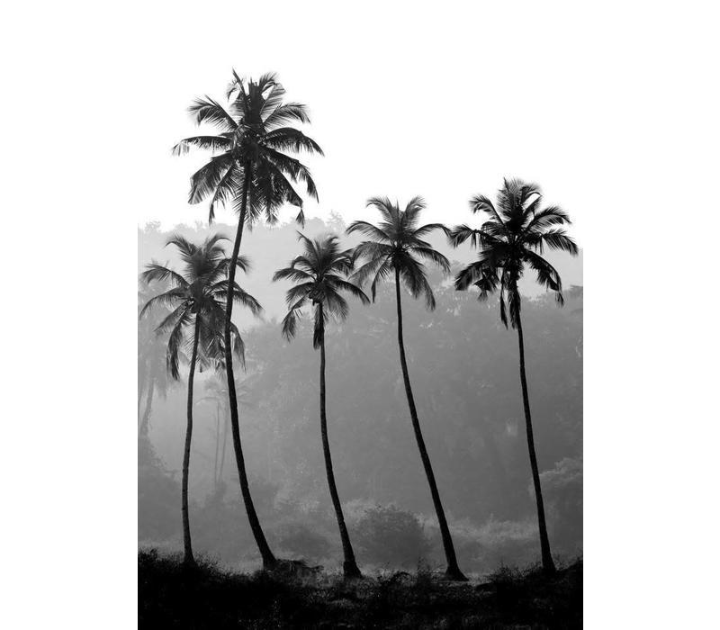 Palm trees 21x29,7 - A4