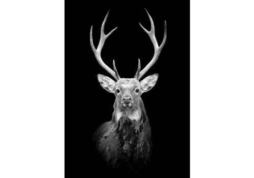 Black deer A4