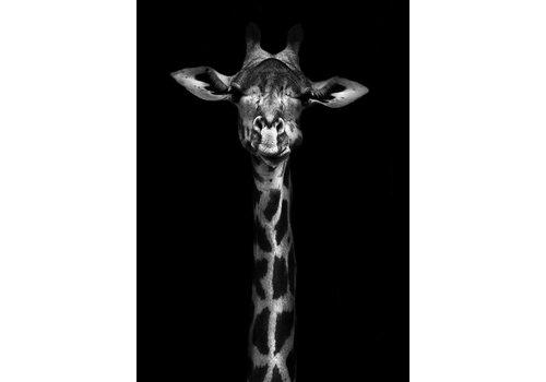 cre8design Giraffe 50x70cm