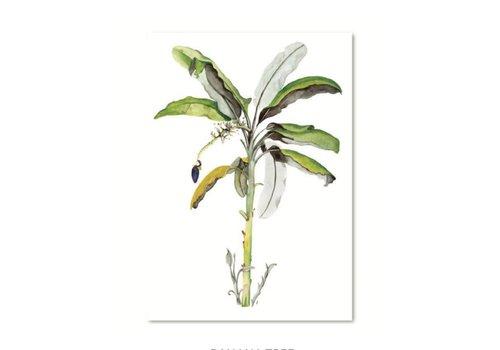 Leo La Douce Banana tree