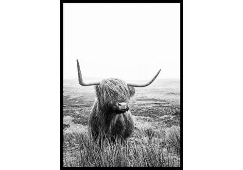 cre8design Schotse Hooglander 50x70