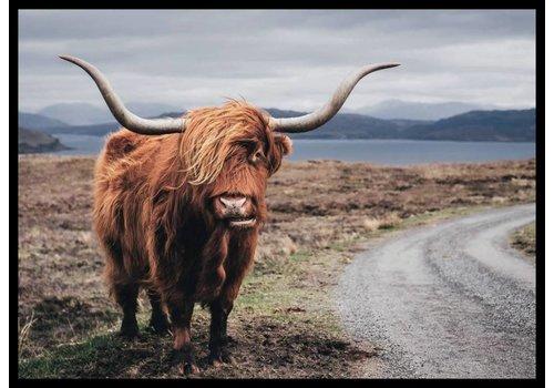 cre8design Schotse hooglander kleur 30x40