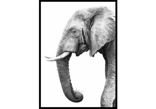 Olifant 50x70