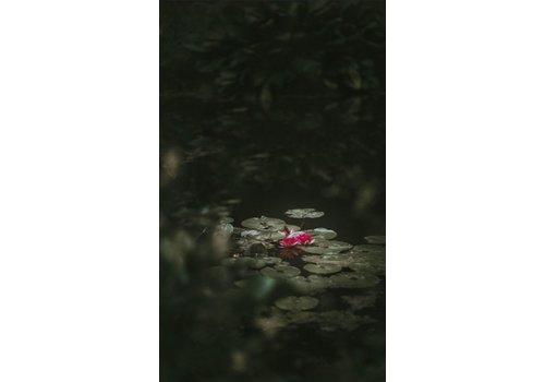 Wandkraft Art of Nature 003 - Dibond