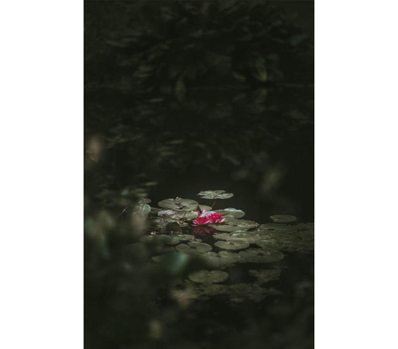Art of Nature 003 - Dibond