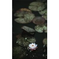 Art of Nature 004 - Dibond