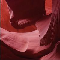 Art of Nature 006 - Dibond