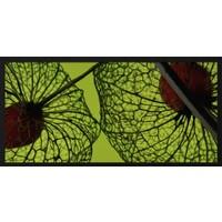 botanical stories 008 - Forex met lijst