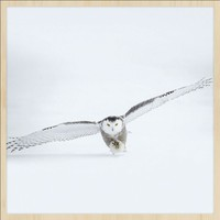 bright wings 008 - Forex met lijst