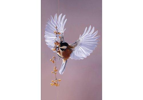 Wandkraft bright wings 020 - Dibond