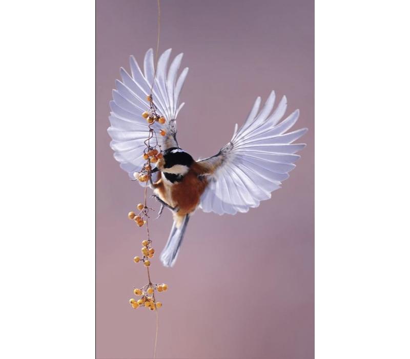 bright wings 020 - Dibond