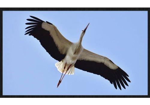 Wandkraft bright wings 021 - Forex met lijst