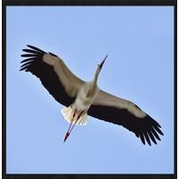 bright wings 021 - Forex met lijst