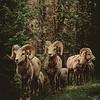 Wandkraft European wildlife 003 - Hout