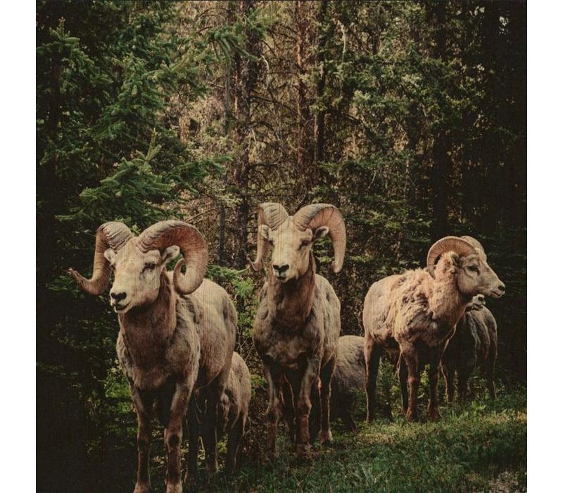 European wildlife 003 - Hout