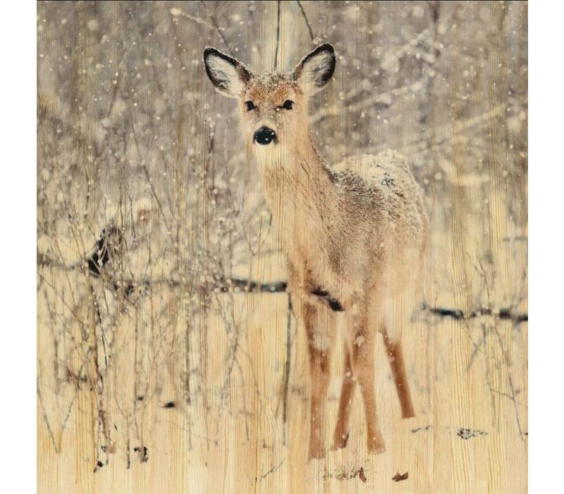 European wildlife 007 - Hout