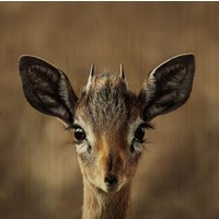 European wildlife 010 - Hout