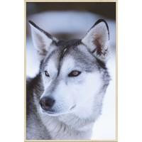 European wildlife 012 - Forex met lijst