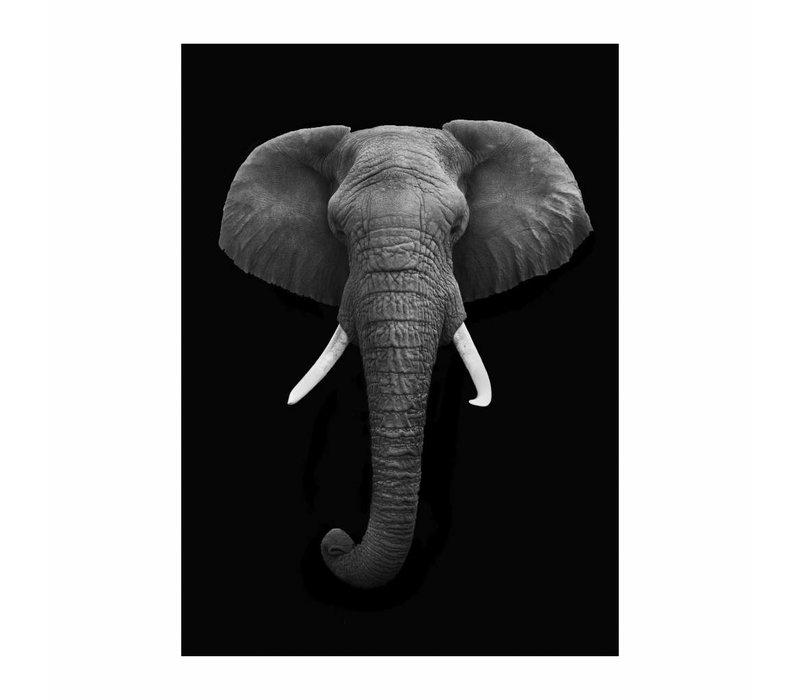 Black Elephant 50x70