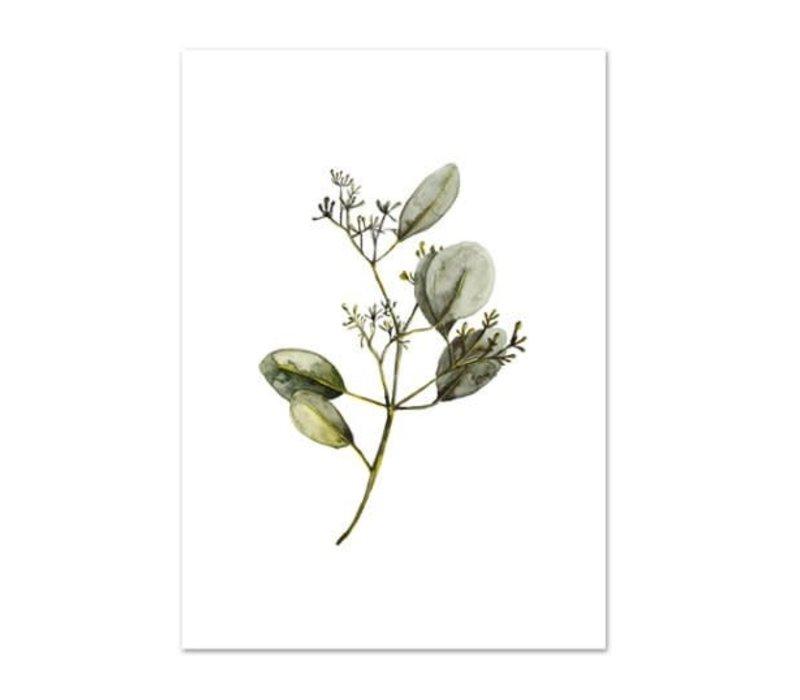 Artprint A4 - Eucalyptus with blossoms