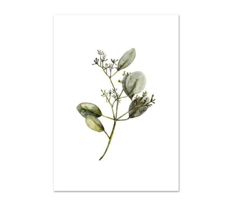 Artprint A3 - Eucalyptus with blossoms
