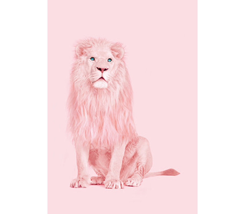 Ansichtkaart Albino leeuw