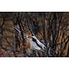 Jan Bloom Photography Springbok