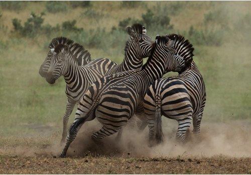 Jan Bloom Photography Zebra 2