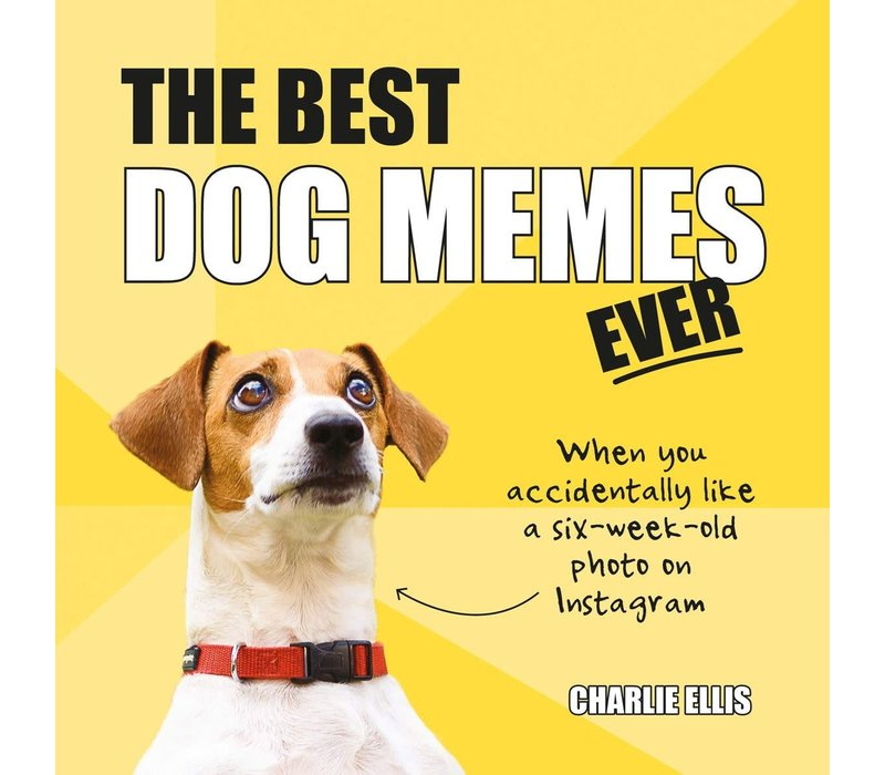 Best dog memes ever