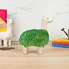 Cortina Llama | Planter With Seeds | Lama met Zaadjes