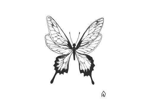 Housevitamin Butterfly