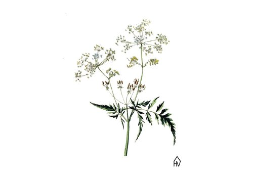 Housevitamin Flut flower