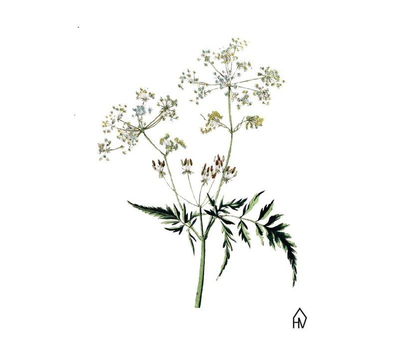 Ansichtkaart : Flut flower