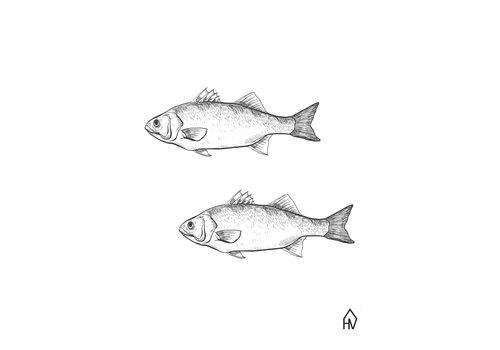Housevitamin Fish