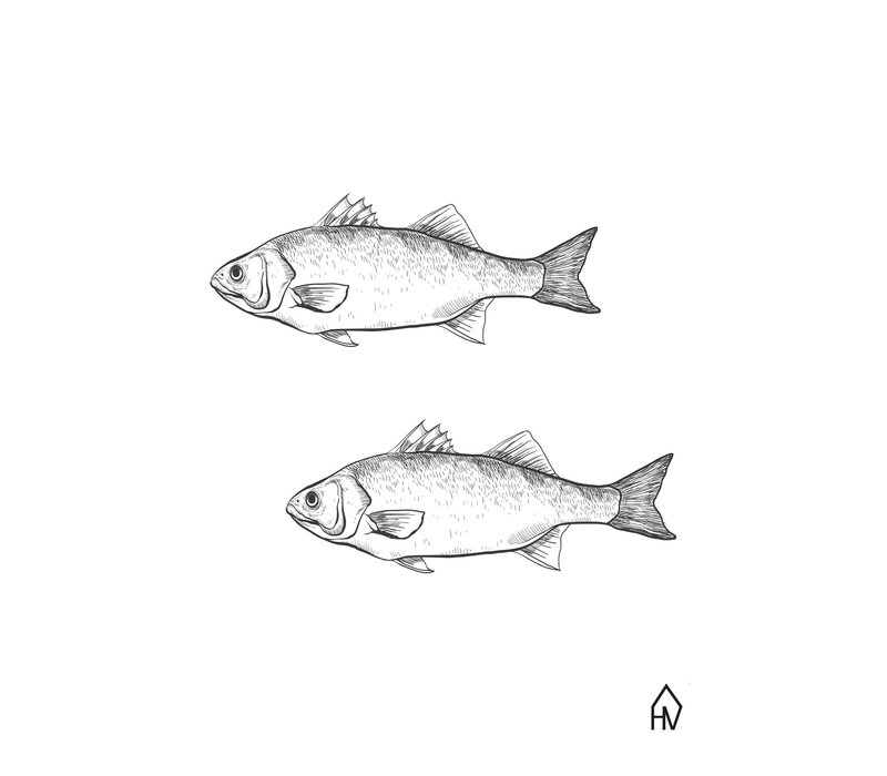 Ansichtkaart Fish