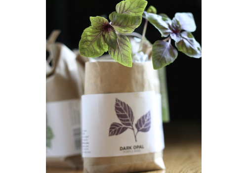 Noted Cultivate & Eat Basil - Dark Opal