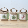 Noted Cultivate & Eat Japanese - Shiso Kweken