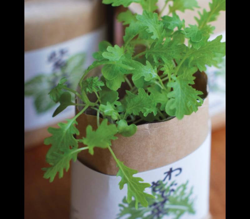 Cultivate & Eat Japanese - Wasabina - Wasabi Kweken