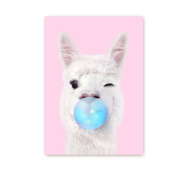 Alpaca met kauwgom