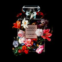 The Perfume Collection VI