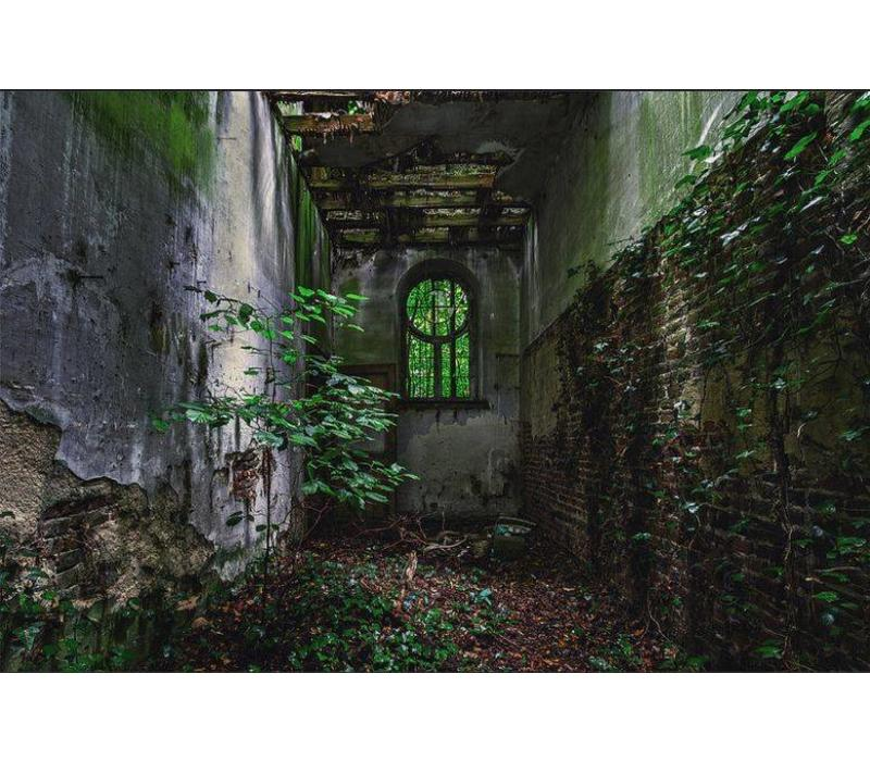 Overgrown alley
