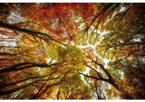 Steven Dijkshoorn Between the trees
