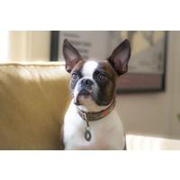 DWAM dog collar Janis S 2,5