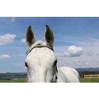 Stirnband Paddy Lee Pony