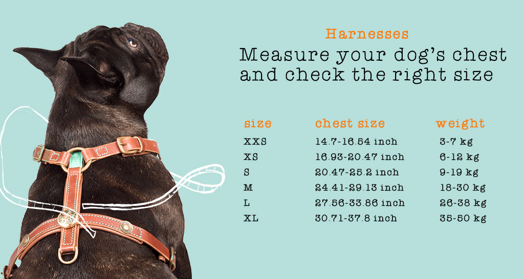 """b3b1425cdd88 Harness """"Rock"""" is fully adjustable along the dog s neck and chest and has  wonderful brass clasps. Once the harness has been properly adjusted you can  easily ..."""